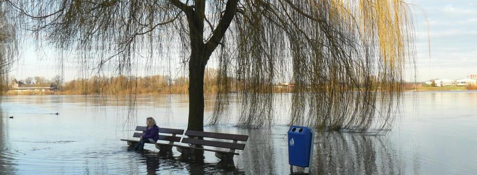 flood-tree-bank-original-980x360